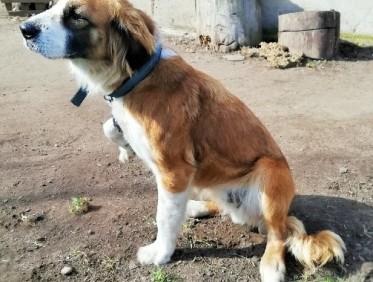 UWAGA - poszukiwany nowy właściciel dla zwierzaka