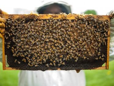 Uwaga rolnicy i pszczelarze!