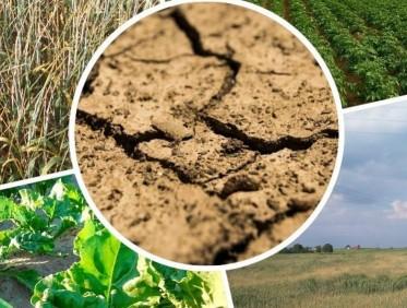 Informacja Wójta Gminy Potęgowo nt. suszy