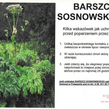 plakat informacyjny z barszczem sosnowskiego