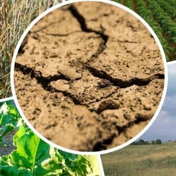 Apel o zgłaszanie do 20 lipca strat spowodowanych suszą